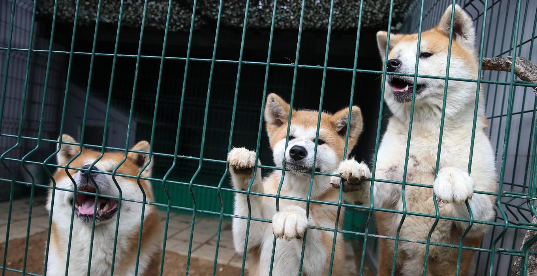 Новый друг: советы для тех, кто решил завести собаку