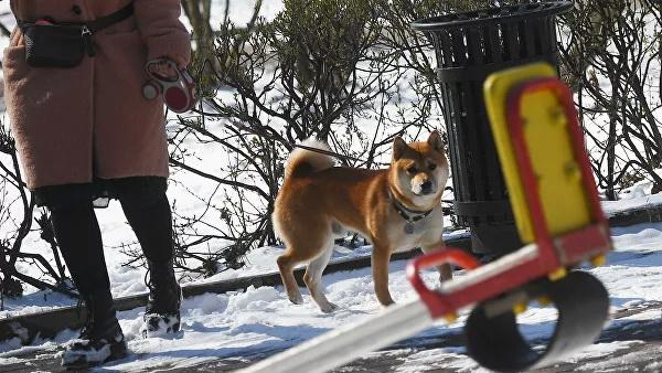 Собянина попросили пересмотреть правила выгула собак при самоизоляции