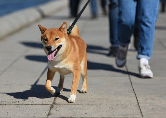 Кинологи предложили закрепить в законе понятия выгул и домашнее животное